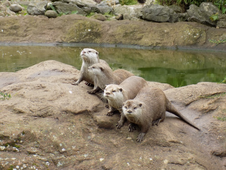 Otters at the London Zoo