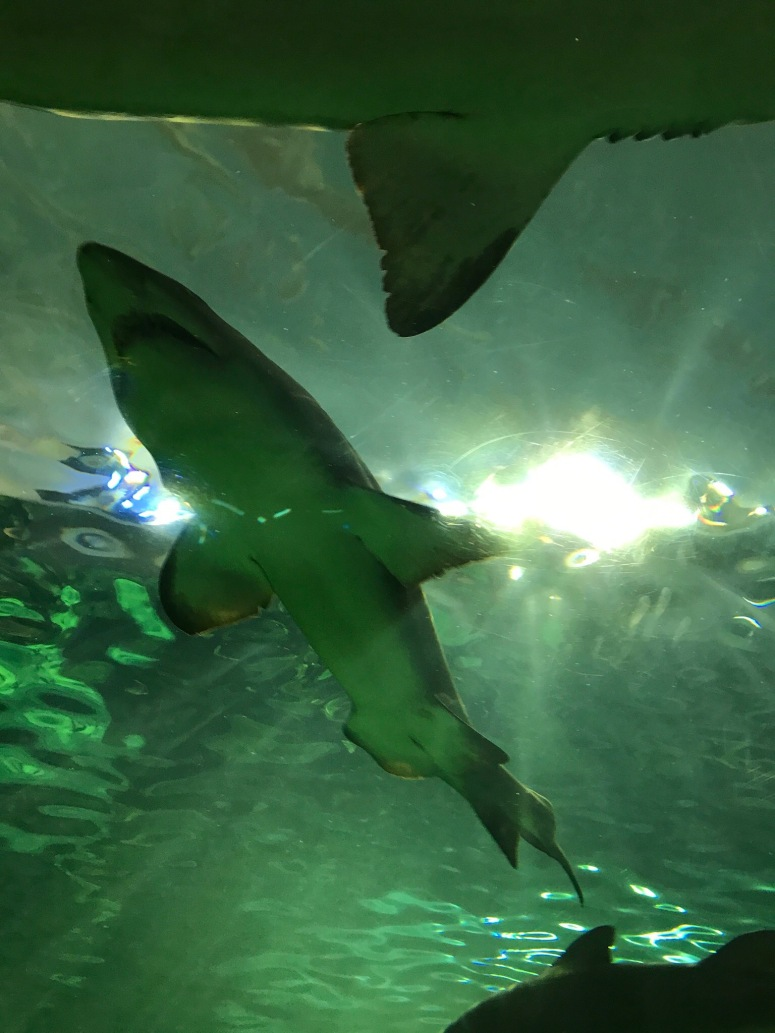 Ripley's Aquarium in Toronto