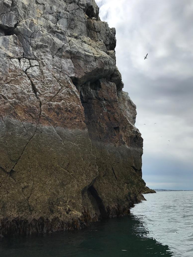 Bird Colony on Ireland's Eye
