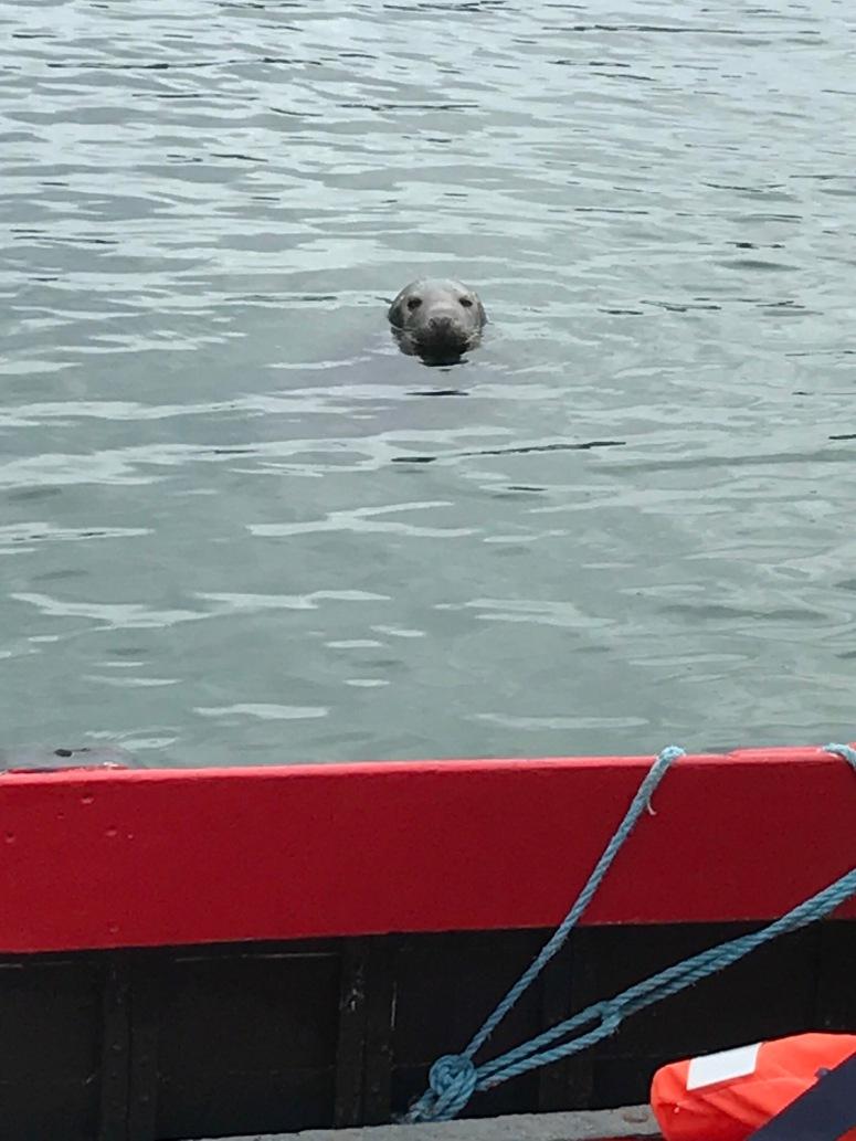 Sea lion on boat ride to Ireland's Eye